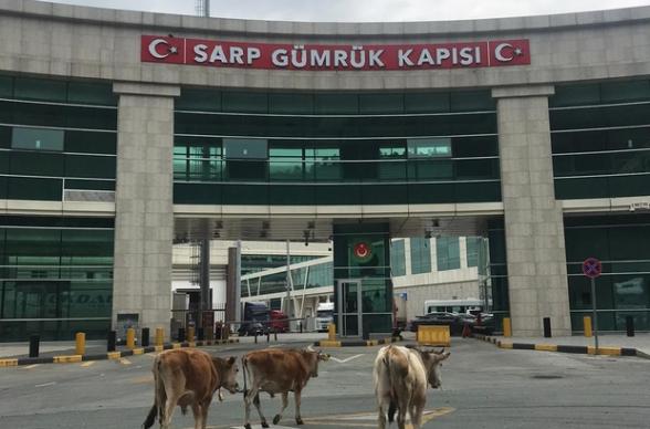 Վրաց-թուրքական սահմանի Սարպի անցակետում այլևս հերթեր չկան․ ազատ թափառում են կովերը (լուսանկար)