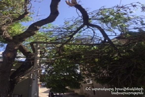 Երևանի Նար-Դոսի փողոցում ծառը կոտրվել և ընկել է էլեկտրական լարերի վրա