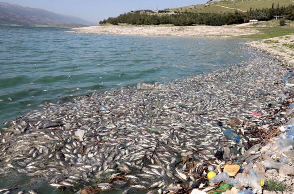 Լիբանանյան լճում հազարավոր սատկած ձկներ են հայտնվել ջրի մակերեսին